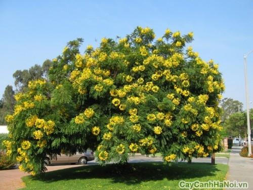 Trên nền lá xan điểm màu hoa Chuông Vàng
