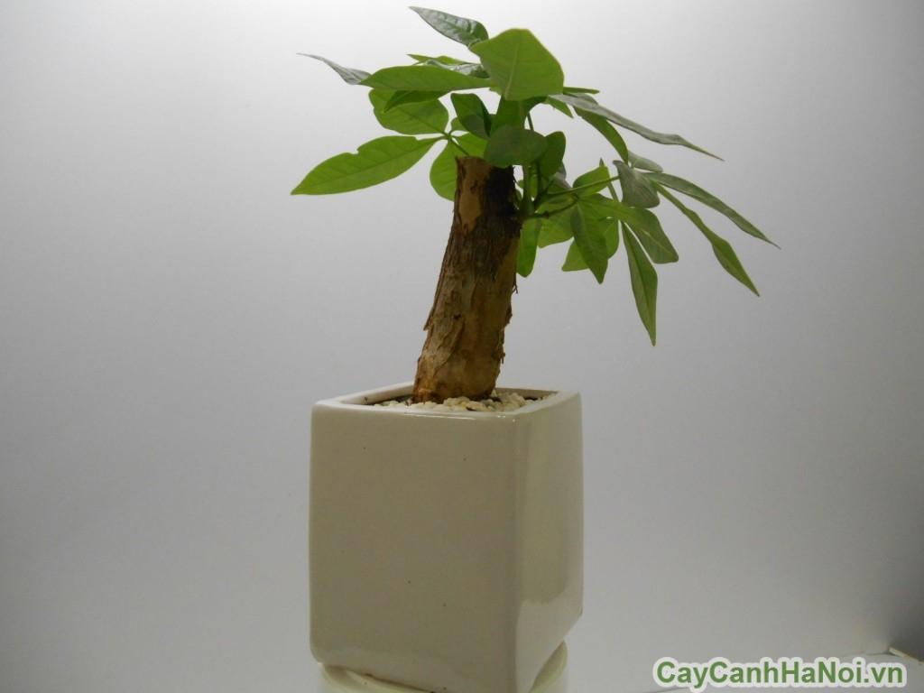 cây xanh nội thất