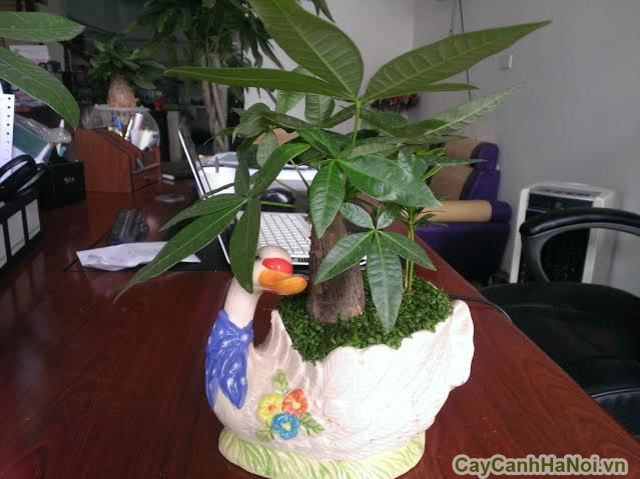 cây xanh văn phòng