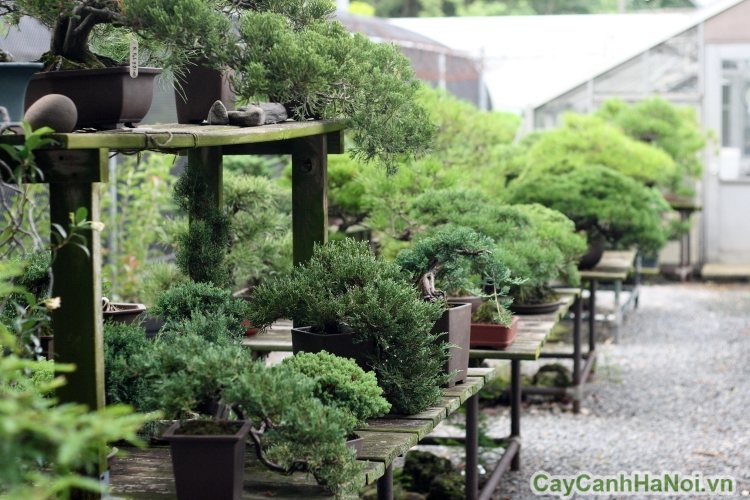 Độc đáo với cảnh quan sân vườn thiết kế mang phong cách Nhật Bản