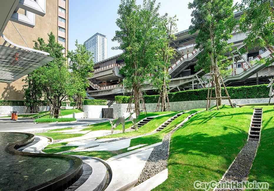 thiên nhiên xanh của cảnh quan sân vườn