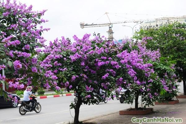 cay-xanh-cong-trinh