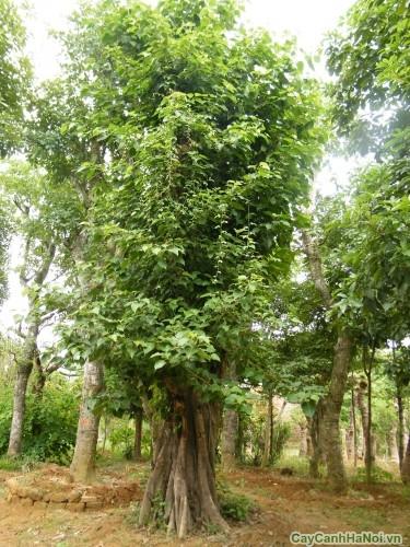 Vườn cây Bồ Đề