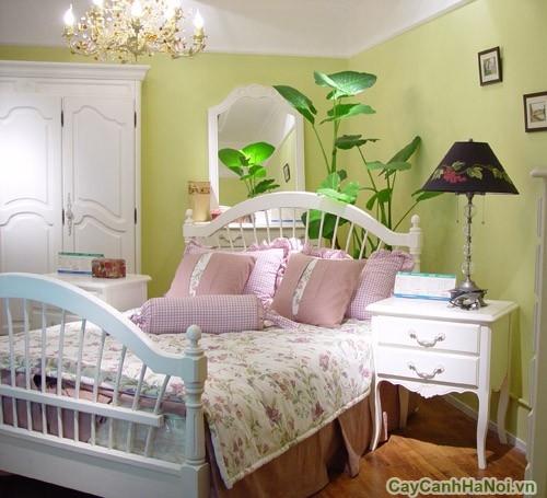 Cần chọn cây cảnh phù hợp đặt trong phòng ngủ sẽ có lợi cho sức khỏe
