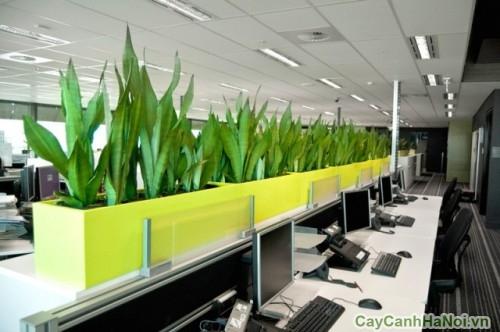 Cần bố trí không gian để cây cảnh văn phòng sao cho hợp lý