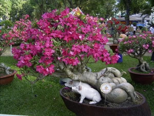 cay hoa su 4
