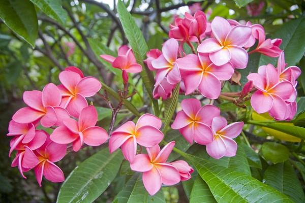 cay hoa su 5