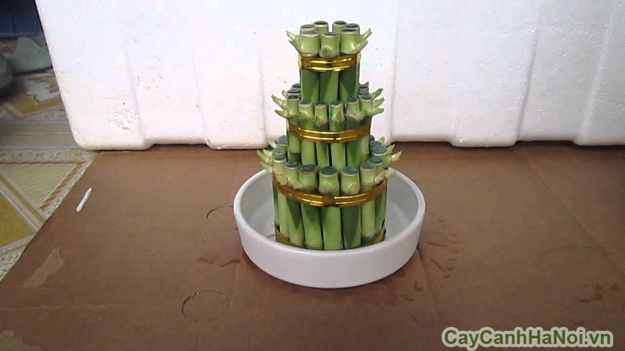 Cây Phát Lộc Tầng để bàn