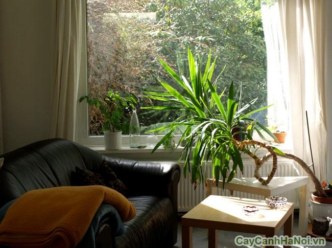 Cây xanh trong nhà đẹp