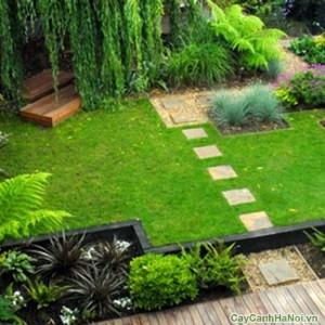 Cây xanh quanh vườn