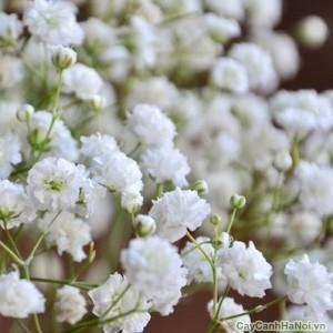 Hoa Baby thể hiện sự dịu dàng nữ  tinh