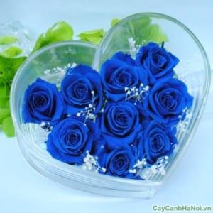Hoa Hồng Xanh được dùng làm quà tặng