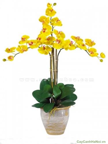 Phân vi lượng kích Lan hồ điệp ra hoa