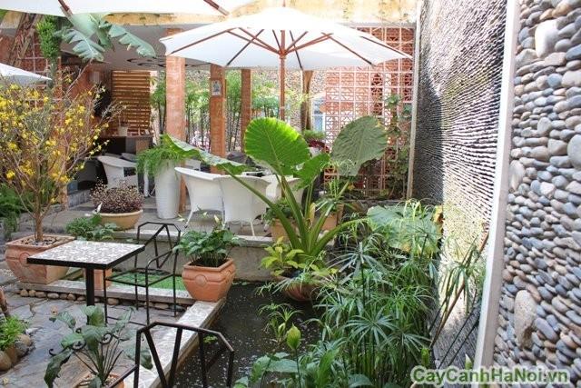 Không gian quán cafe thiên nhiên