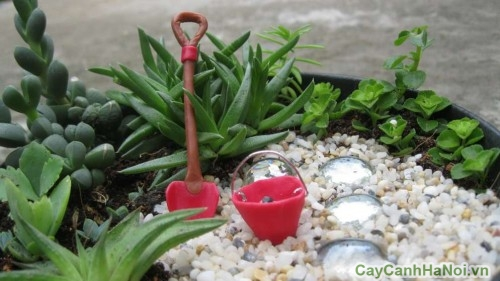 Khu vườn nhỏ với tiểu cảnh mini cây may mắn