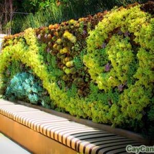 Tường cây ngoại thất mang tính nghệ thuật