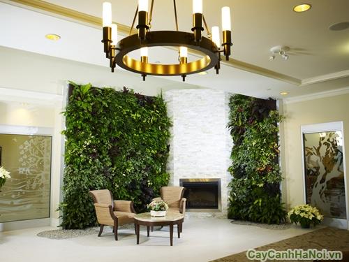 Vườn đứng giúp bảo vệ ngôi nhà thân yêu của bạn