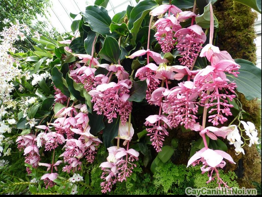 Cần lưu ý chế độ chăm sóc cho hoa lan