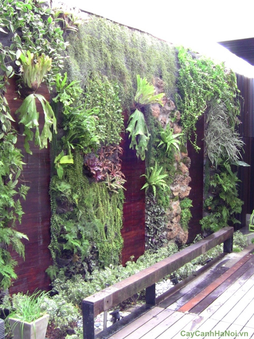 Vườn thẳng đứng - giải pháp tuyệt vời cho ngôi nhà của bạn