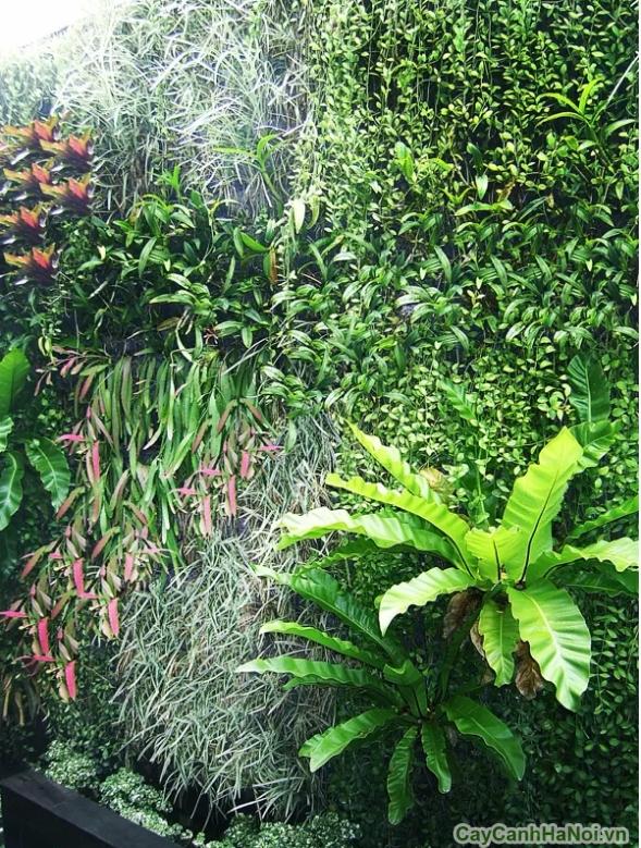Bạn có thể trồng hoa trên những mảng tường xanh
