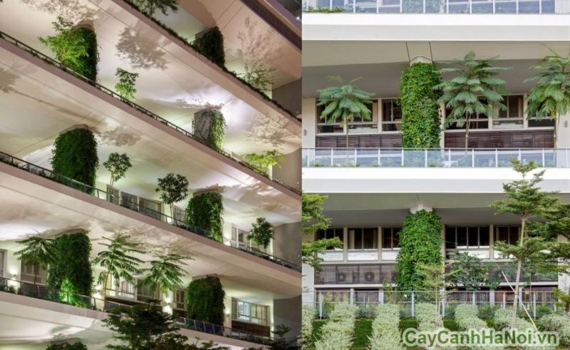 Vườn thẳng đứng có ở các tầng khu chung cư