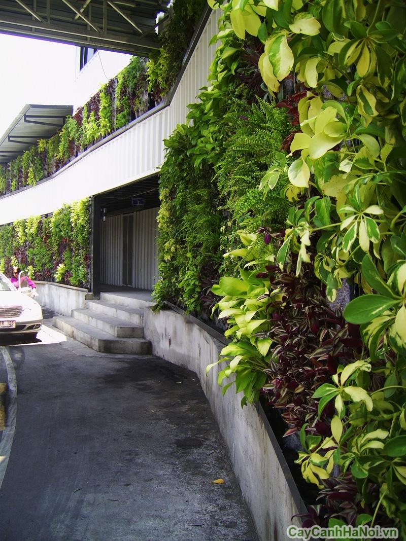 Vườn thẳng đứng dọc theo lối vào