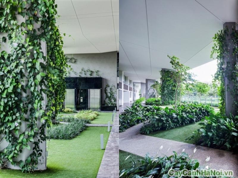 Vườn thẳng đứng tạo ra một cảnh quan đẹp