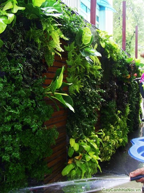 Cần lưu ý chế độ tưới nước và chăm sóc vườn đứng