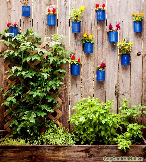 Tiểu cảnh sân vườn độc đáo cùng vườn treo tường