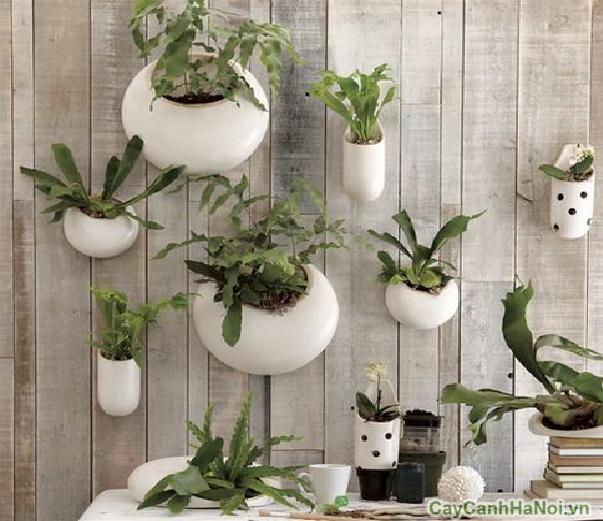 Vườn treo tường với chậu sứ trắng đẹp