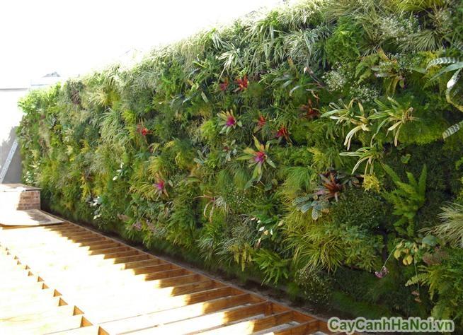 Thiết kế vườn tường trên mái