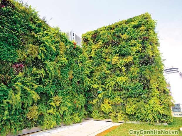 Thiết kế vườn tường trên sân thượng