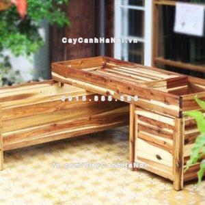 chau_go_trong_cay_chu_l_dcds016-3