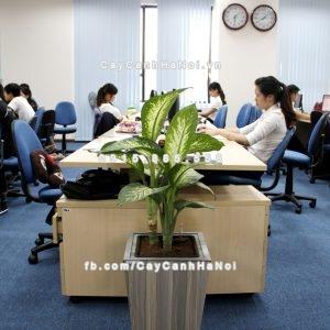 chau_go_trong_cay_thong_minh_tu_tuoi_gwl-121b-4