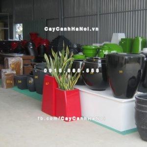 chau_composite_trong_cay_cao_cap_8_1108