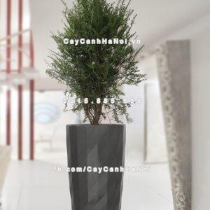 chau_composite_trong_cay_thong_minh_cao_cap_n121
