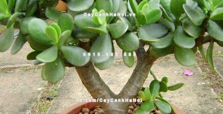 5-loai-cay-canh-dep-sinh-tai-loc-trong-trong-nha-khong-bo-qua-1