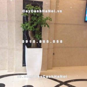 Chậu cây cảnh composite iPot vát đáy ( IP-00180)