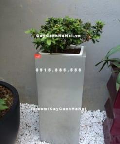 Chậu cây cảnh composite iPot vuông ( IP-00021 )