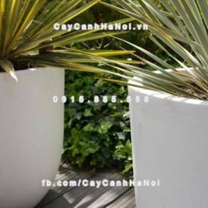 Chậu cây composite iPot sang trọng ( IP-00010 )