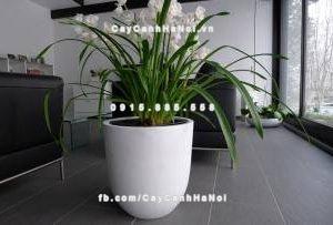 Chậu composite iPot trồng cây ( IP-00013 )