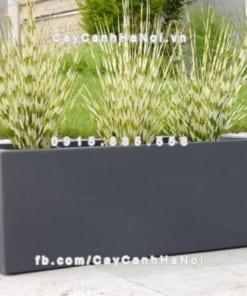 Chậu hoa composite iPot hình chữ nhật ( IP-00079)