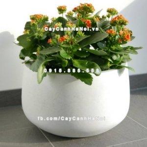 Chậu hoa composite iPot tròn cao cấp ( IP-00102)