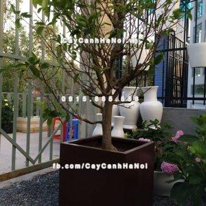 Chậu composite iPot trồng cây cao cấp ( IP-00093 )