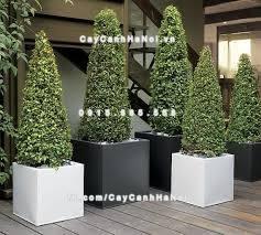 Chậu nhựa composite iPot trồng cây đẹp mắt ( IP-00095 )