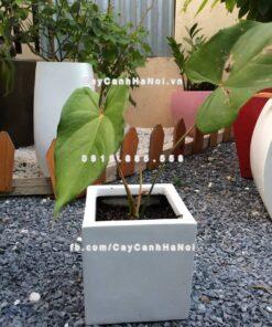 Chậu nhựa composite iPot trồng cây hình vuông ( IP-00087 )