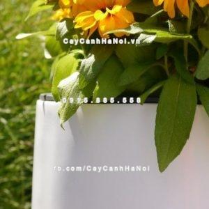 Chậu nhựa composite iPot trồng cây ( IP-00035)