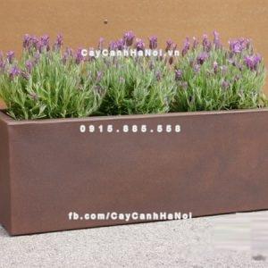 Chậu nhựa composite iPot trồng cây ( IP-00083)