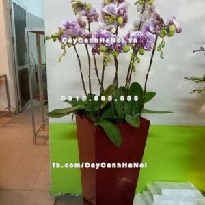 Chậu nhựa trồng cây composite iPot cao cấp ( IP-00070 )