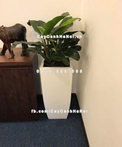 Chậu nhựa trồng cây composite iPot cao cấp ( IP-00179)